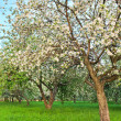 Beautiful blooming of apple and fruit trees — Stock Photo