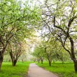 Beautiful blooming of apple and fruit trees — Foto de Stock