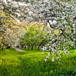 Beautiful blooming of apple and fruit trees — Stock fotografie