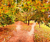 Beautiful colorful autumn park in sunny day, perspective vanishing alley — Stock Photo