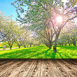 Stock Photo: Bright beautiful light blooming rural apple trees alley in sunny