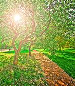 Piękny kwitnący dekoracyjne białe jabłko i owoce drzewa ove — Zdjęcie stockowe