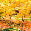 Beautiful colorful autumn park in sunny day — Stock Photo #25425289