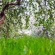 Beautiful blooming of decorative white apple and fruit trees over bright blue sky in colorful vivid spring park full of green grass by dawn early light with first sun rays, fairy heart of nature — Stock Photo #26754683