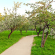 Beautiful blooming of decorative white apple and fruit trees over bright blue sky in colorful vivid spring park full of green grass by dawn early light with first sun rays, fairy heart of nature — Stock Photo #26755187