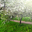 Beautiful blooming of decorative white apple and fruit trees over bright blue sky in colorful vivid spring park full of green grass by dawn early light with first sun rays, fairy heart of nature — Stock Photo #26755421