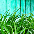 Green grass on wooden background  — Stock Photo