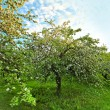 Beautiful blooming of decorative white apple and fruit trees over bright blue sky in colorful vivid spring park full of green grass by dawn early light with first sun rays, fairy heart of nature — Stock Photo #26756391