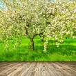 Beautiful blooming of decorative white apple and fruit trees over bright blue sky in colorful vivid spring park full of green grass by dawn early light with first sun rays, fairy heart of nature — Stock Photo #26761027
