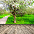 Beautiful blooming of decorative white apple and fruit trees over bright blue sky in colorful vivid spring park full of green grass by dawn early light with first sun rays, fairy heart of nature — Stock Photo #26761149