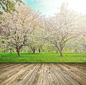 Beautiful blooming of decorative white apple and fruit trees over bright blue sky in colorful vivid spring park full of green grass by dawn early light with first sun rays, fairy heart of nature — Zdjęcie stockowe