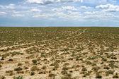 Ground road in the desert. — Stock Photo