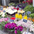 Amsterdam flower market — Stock Photo
