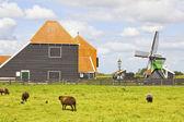 Campagna in olanda — Foto Stock