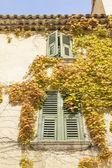 Window full of leafs — Stock Photo