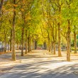 Calm park near the Champs Elysess, Paris, France — Stock Photo