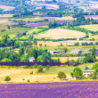 Aerial the lavender fields in Provence, France — Stock Photo