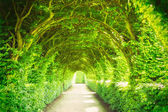 Garden with trees and light — Stock Photo