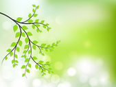 Abstract nature background with fresh green leaves. — Vector de stock