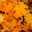 Colorful autumn leaves background — Stock Photo