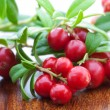 Fresh cowberry — Stock Photo #12422265