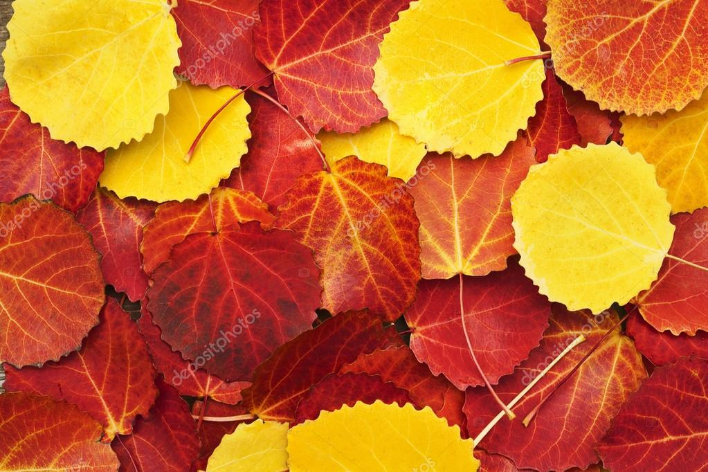 Colorful autumn leaves background  — ストック写真 #12422121