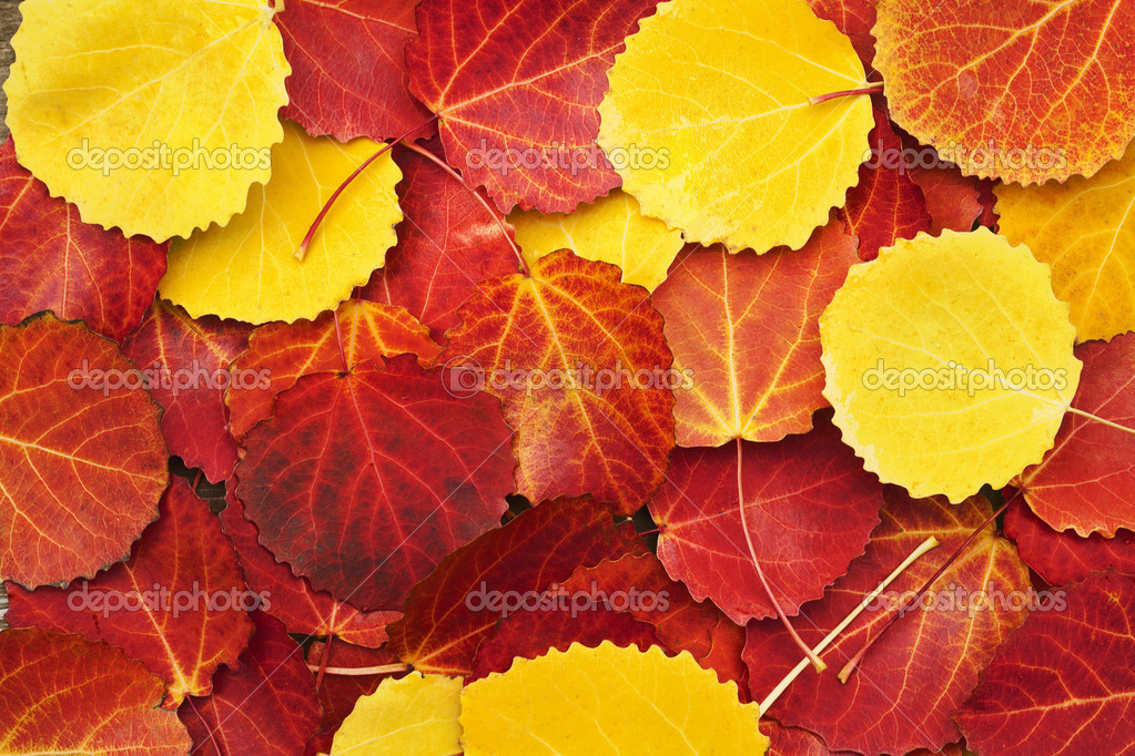 Colorful autumn leaves background  — Foto Stock #12422121