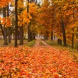 Autumn park — Stock Photo #12751936