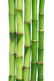 Bamboo isolated — Stock Photo
