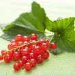 Fresh redcurrant — Stock Photo