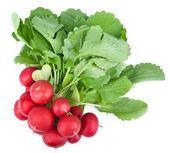 Fresh radish isolated — Stock Photo
