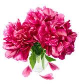 Peony in vase isolated — Stock Photo