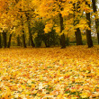 Stock Photo: Autumn park with maple trees