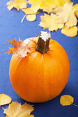 Pumpkin on blue background — Stock Photo