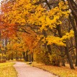 Autumn park — Stock Photo #31710831
