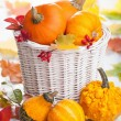 Decorative pumpkins in basket — Photo