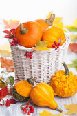 decorative pumpkins in basket — Stock Photo