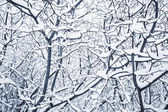 Snowy winter trees background — Stock Photo