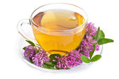 Herbal tea and clover flowers over white — Stock Photo