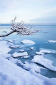 Norwegian winter fjord landscape with tree and ice — Stock Photo