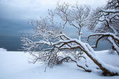 Norwegian winter fjord landscape with tree — Stock Photo