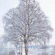 Stock Photo: Winter landscape with snowy tree