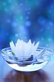 White water lilly flower over blue — Stock Photo