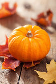 Pumpkin on wooden background  — Stock Photo