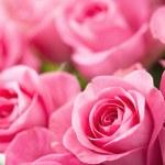 Beautiful pink rose flowers background — Stock Photo #51242121