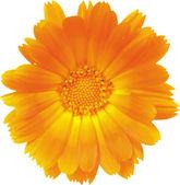 La fleur — Vecteur
