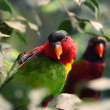 Two parrots on a tree. - 