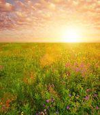Beautiful sky over flower field — Stock Photo