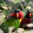 Two parrots on a tree. - Stockfoto