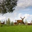 Deer flock in natural habitat - Stock Photo